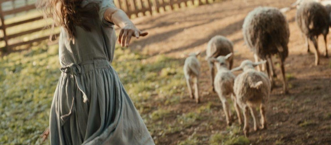farmermax bárány takarmány