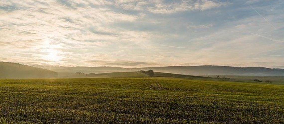farmermax-lóhere-lucerna